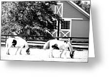 Black And White Clydesdale Grazing Greeting Card