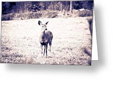 Black And White Deer Greeting Card