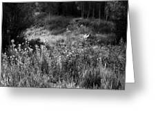 Black And White Dreams Greeting Card
