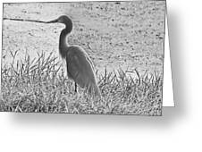 Black And White Egret  Greeting Card