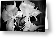 Black And White Hawaiian Ginger Flowers Greeting Card