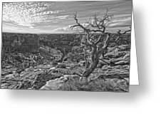 Black And White Image Of Tree Greeting Card