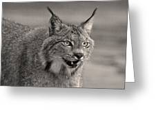 Black And White Lynx Greeting Card