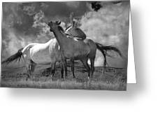 Black And White Photograph Of Montana Horses Greeting Card