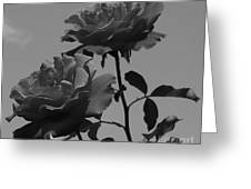 Black And White Roses Greeting Card