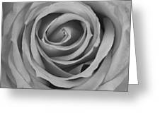 Black And White Spiral Rose Petals Greeting Card