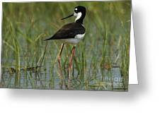 Black And White Stilt Greeting Card