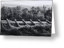 Black And White Vineyard Sunrise  Greeting Card