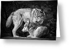 Black And White Wolves Greeting Card