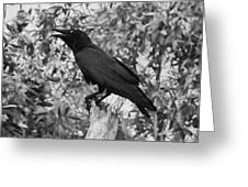 Black As The Night Greeting Card