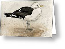 Black Backed Gull  Greeting Card