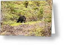Black Bear 1899 Greeting Card
