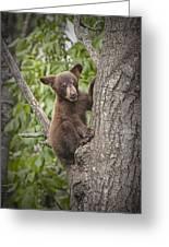 Black Bear Cub Hanging On Greeting Card