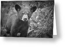Black Bear Cub In A Pine Tree Greeting Card
