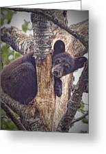 Black Bear Cub No 3224 Greeting Card