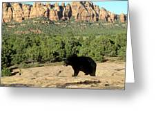 Black Bear In Utah Greeting Card