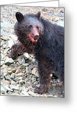 Black Bear Bloodied Lunch Greeting Card