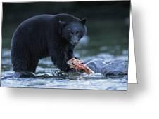 Black Bear With Salmon Carcass Greeting Card