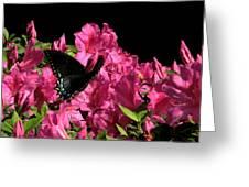Black Beauty In Flight Greeting Card