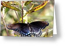 Black Beauty In The Bush Greeting Card