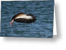 Black-belled Whistling-duck In Flight Greeting Card