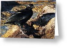 Black Bird With Yellow Eyes Greeting Card