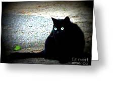 Black Cat Beauty Greeting Card