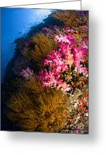 Black Coral And Soft Coral Seascape Greeting Card