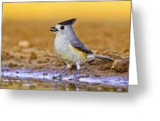Black Crested Titmouse Greeting Card