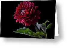 Black Dahlia Greeting Card