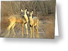 Black Ear Deer Greeting Card