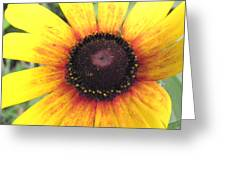 Black Eyed Beauty Greeting Card