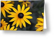 Black-eyed Susan Greeting Card by Chris Hill