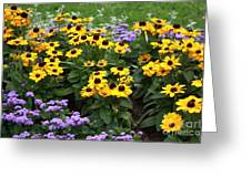 Black Eyed Susan In Castle Garden Greeting Card