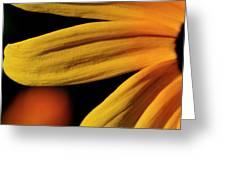 Black Eyed Susan Petal Greeting Card