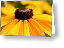 Black Eyed Susan Summer Greeting Card