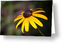 Black Eyed Susan With Young Bee Greeting Card