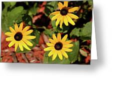 Black Eyed Susans Greeting Card