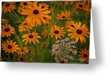 Black Eyed Susans Greeting Card