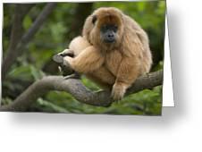 Black Howler Monkey Alouatta Caraya Greeting Card