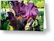 Black Iris Greeting Card