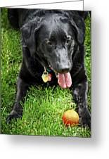 Black Lab Dog With A Ball Greeting Card by Elena Elisseeva