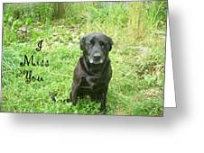 Black Lab Miss You Greeting Card