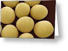 Black Mustard Seeds, Sem Greeting Card
