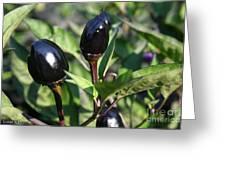 Black Olive Pepper Greeting Card