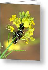 Black Painted Bugs On Mustard Stem 1 Greeting Card