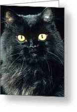 Black Persian Cat Greeting Card