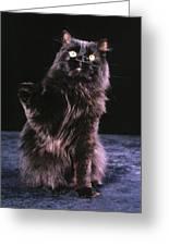Black Persian Cat Reaches Greeting Card