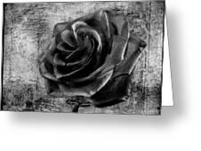 Black Rose Eternal  Bw Greeting Card