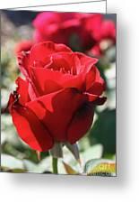 Black Rose Red Greeting Card